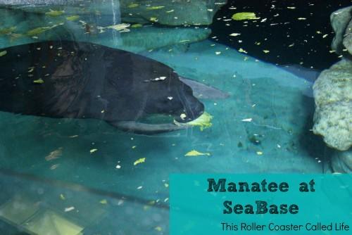 Manatees at SeaBase