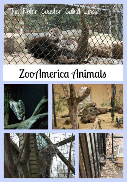 ZooAmerica Animals