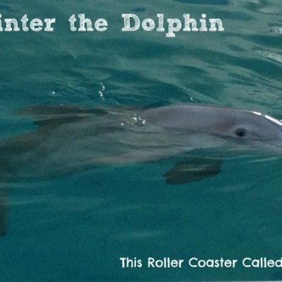 The Day We Met Winter at Clearwater Marine Aquarium