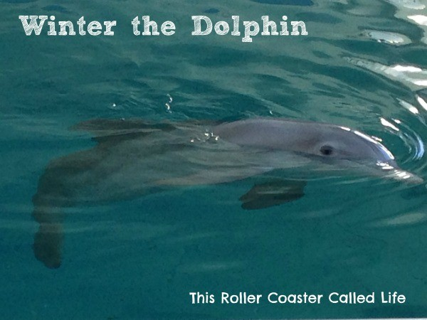 Winter Dolphin
