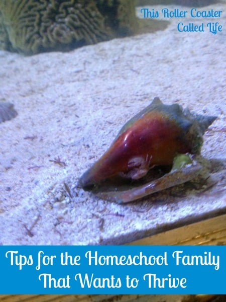 Tips for the Homeschooling Family That Wants to Thrive