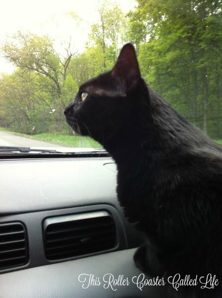 Driving Helper