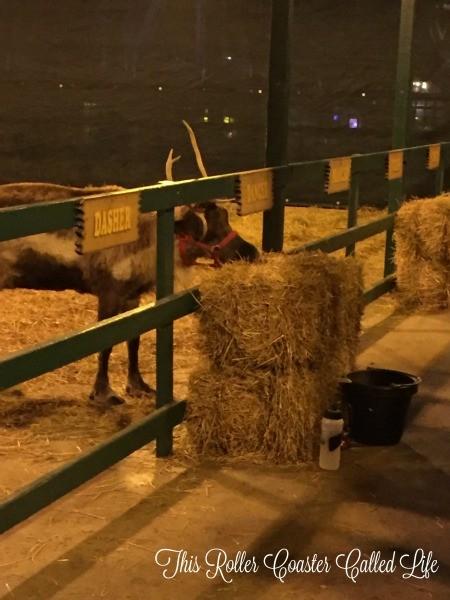 Reindeer at Hersheypark
