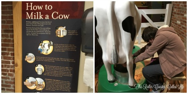 How to Milk a Cow at Turkey Hill Experience