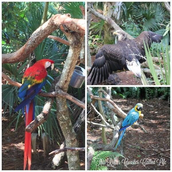 Brevard Zoo Birds