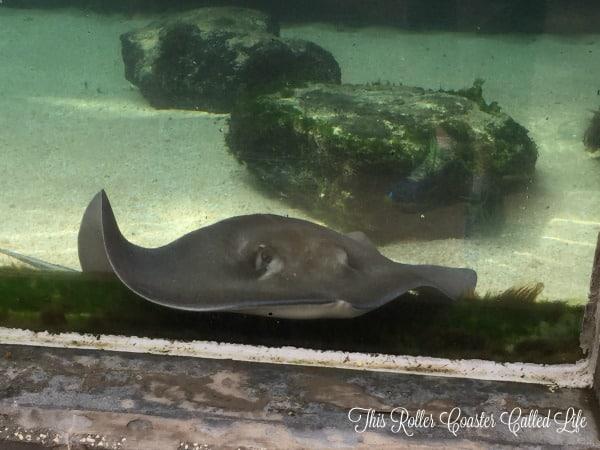 Brevard Zoo Sting Ray