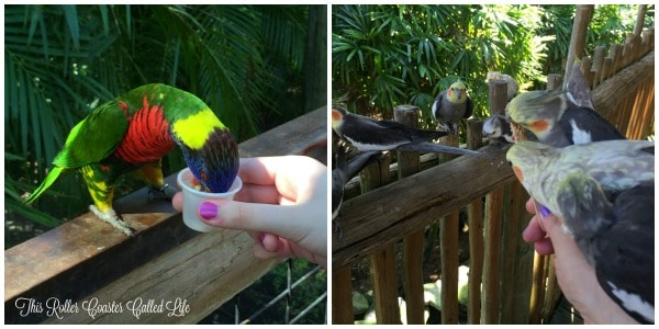 Feeding the Birds at Brevard Zoo