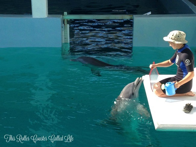 Hope and Winter at Clearwater Marine Aquarium