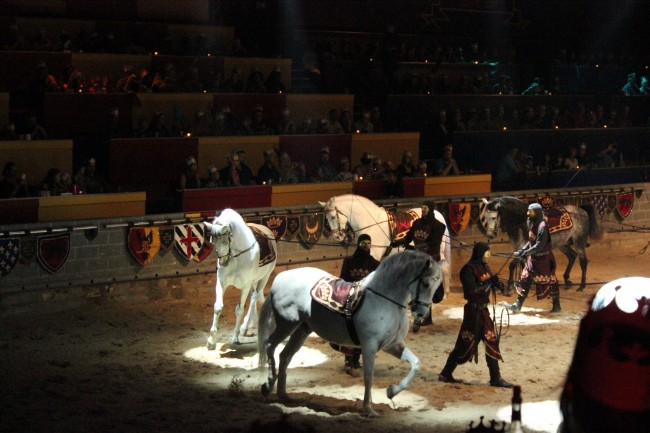 Medieval Times Florida Horses