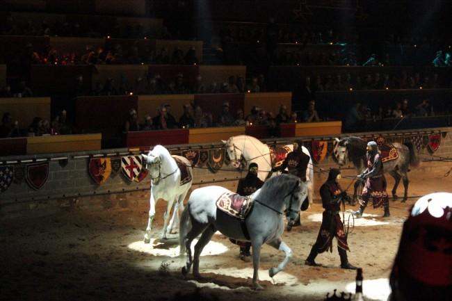 Medieval Times Florida Horses