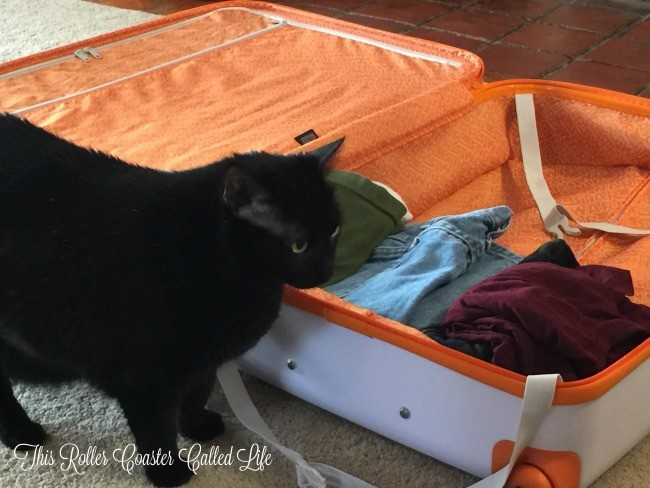 Kitty approved American Tourister suitcase