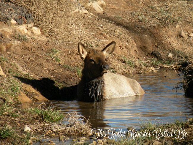 Animals at Grand Canyon 2