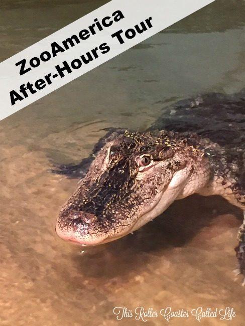 Alligator at ZooAmerica