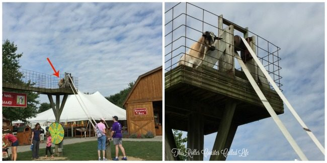 Feeding Goats at Cherry Crest Adventure Farm
