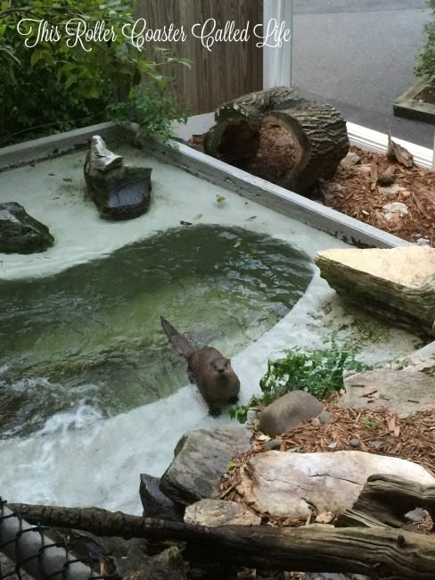 Feeding the Otters at ZooAmerica