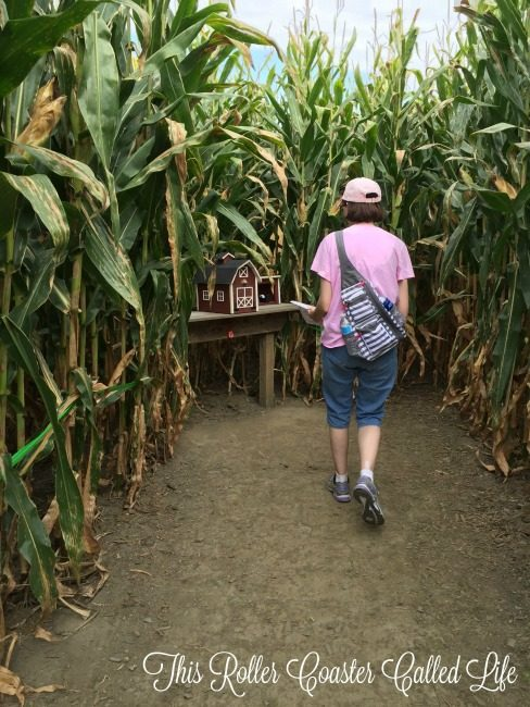 Mailbox in the Corn Maze