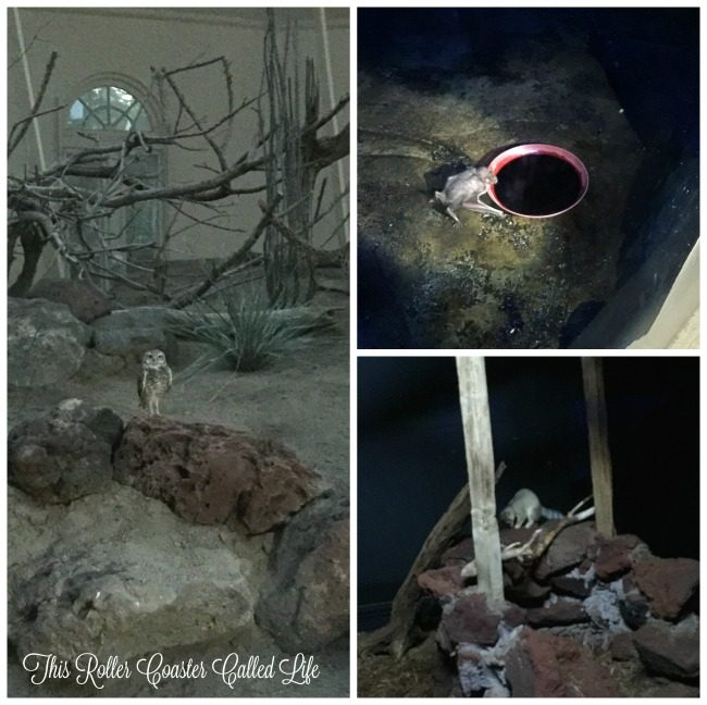 Nocturnal Animals at ZooAmerica