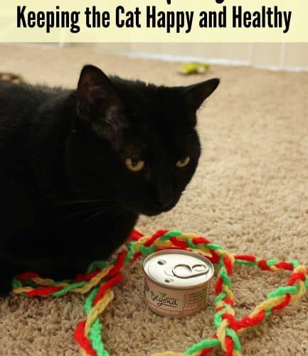 Purina Beyond with DIY Cat Toy