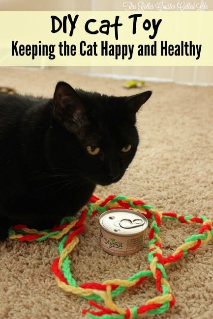 Keeping the Cat Happy and Healthy and DIY Cat Toy