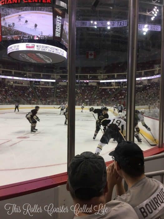 bears-hockey