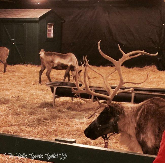 santa-reindeer-at-hersheypark