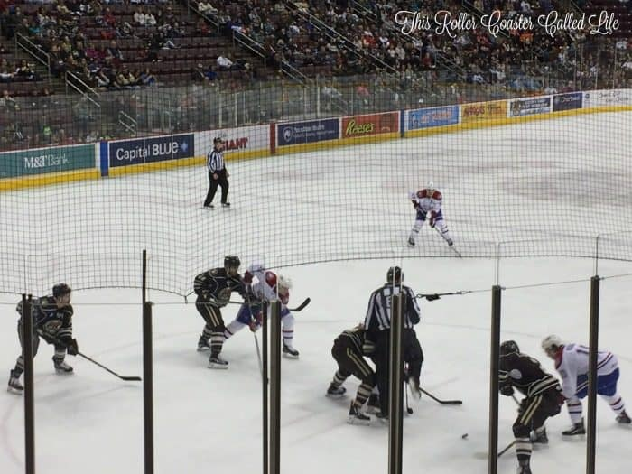 hershey-bears-fight-for-the-puck